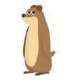 cute brown bear vector image