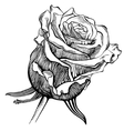 black and white digital drawing sketch rose vector image vector image