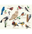 bird icons Colorful realistic birds icons set vector image