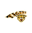 Tiger sports mascot head front vector image