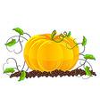 pumpkin in garden vector image
