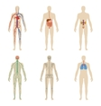 Set human organs and systems of the body vitality vector image