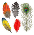 hand drawn set of various colorful bird feathers vector image
