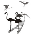 Flamingos on the ladder in grayscale vector image vector image