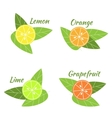 Citrus fruits orange lime grapefruit and lemon vector image