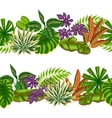 Seamless borders with tropical plants and leaves vector image