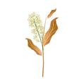 Combretum Flower or Combretum Latifolium Flower vector image vector image