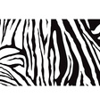 Zebra Stripes Pattern vector image