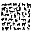Dog Set Silhouettes vector image