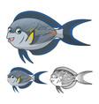 Sohal Surgeonfish vector image