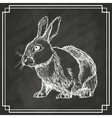 white bunny sketch dark background vector image