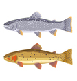 Lake trout and cutthroat trout vector image vector image