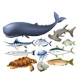 Aquatic animals on white vector image