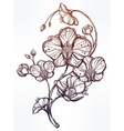 Hand drawn orchid flower vector image vector image