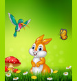 cute bunny with beautiful green grass vector image
