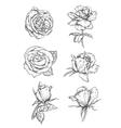 Rose buds icons Flower sketch emblems vector image
