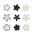 tropical flowers frangipani plumeria on white vector image