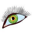 green female eye vector image vector image