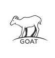 goats mountain on white background wild animals vector image