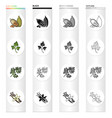 cocoa beans a leaf of a herb of a dill a parsley vector image