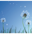 realistic dandelions vector image vector image