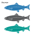 Salmon fish vector image