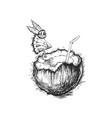 coconut drink hand drawn vector image