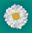 realistic of a daisy vector image
