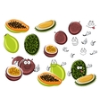 Papaya maracuja and durian fruits vector image