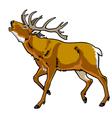 red deer vector image