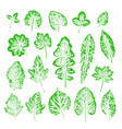 set of leaf imprints collection of green leaves vector image