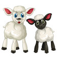 two little lambs on white background vector image
