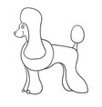 contour poodle isolated on white background vector image