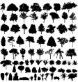 Plant silhouettes vector image