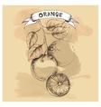 sketch of orange for design vector image