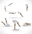 Legs and socks vector image