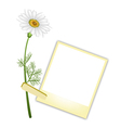 A Beautiful White Daisy with Blank Photos vector image