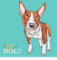 smiling cartoon Bull Terrier Dog breed vector image