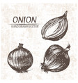 digital detailed onion hand drawn vector image