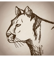 panther portrait forest hand drawing vintage vector image