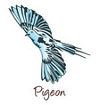 pigeon color vector image