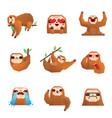 sloth polygonal set vector image vector image