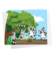 lemurs on a log vector image vector image