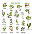 best herbs for cardio tonic vector image