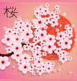 cherry branch with blooming flowers vector image