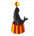 the circus seal vector image