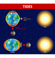 Tides vector image vector image