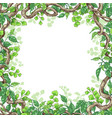 green leaves and liana branches frame vector image