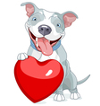 Valentine Pit Bull Dog vector image vector image