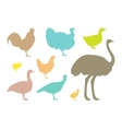 Farm bird silhouettes vector image